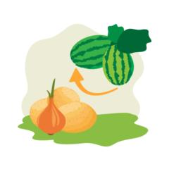 Match Fruits/Veggies